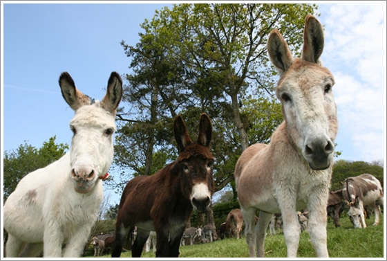 The Donkey Sanctuary, Devon, UK