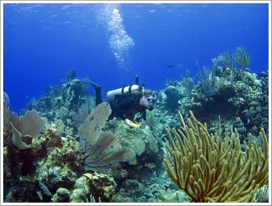 Bahama Island Diving