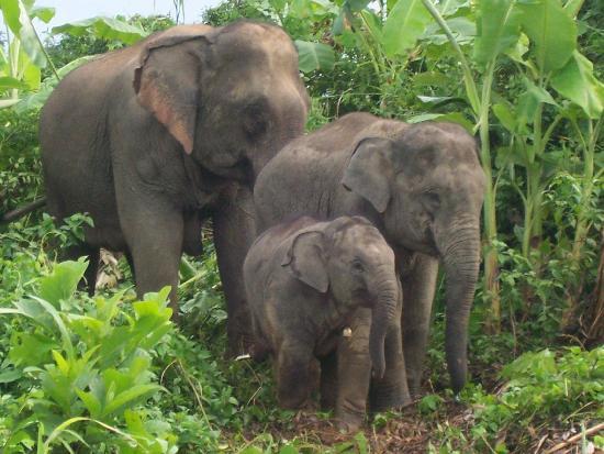 Boon Lott's Elephant Sanctuary, Thailand