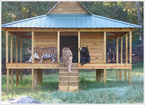 Noahs Ark, United States