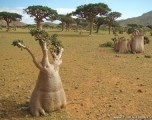 An Alien Island: Socotra Island