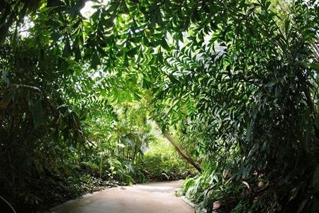 World's Largest Indoor Tropical Rainforest
