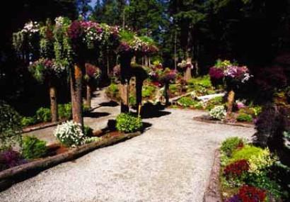 "Visit the 'Upside Down Trees"" at Glacier Gardens in Alaska"