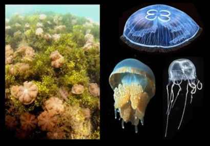 Kakaban Lake : The largest Jelly Fish Lake In The World