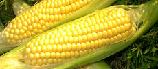 The Benefits of Sweet Corn for health