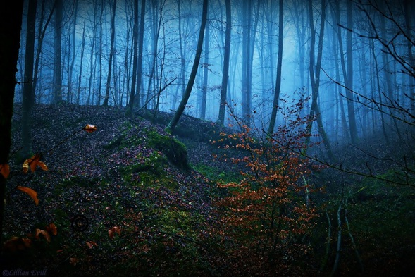 Black-Forest-Germany3