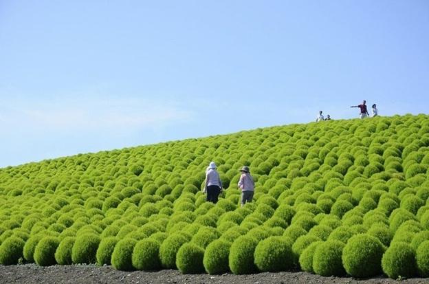 Hitachi-Seaside-Park-Japan2