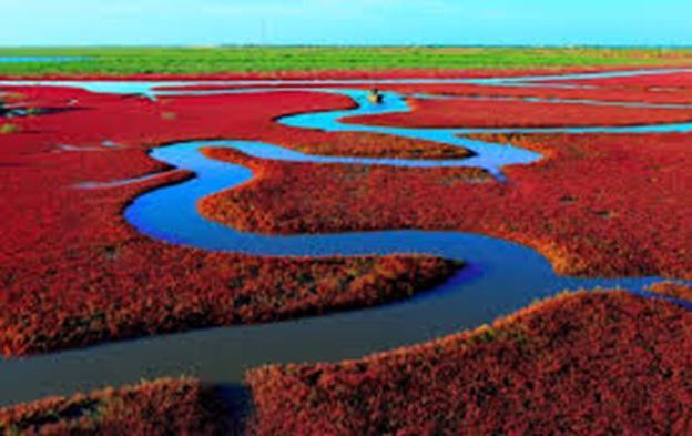 Red-Beach-Panjin-China