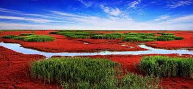 Red-Beach-Panjin-China1