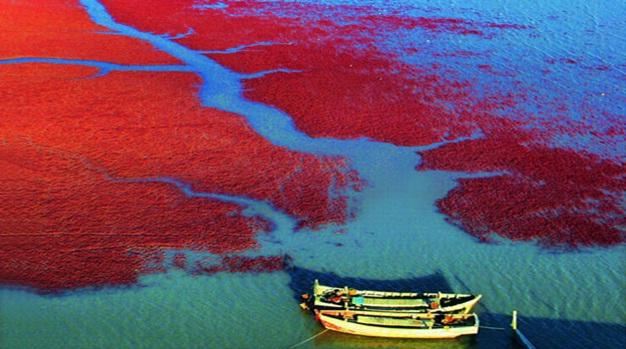Red-Beach-Panjin-China2