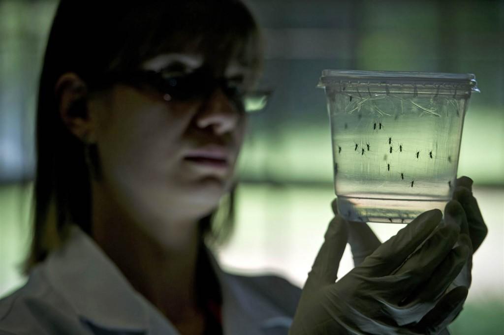 160114-zika-aedes-aegypti-mosquito-mn-1216_408557b99ee1619e962b167517a4cf07.nbcnews-ux-2880-1000