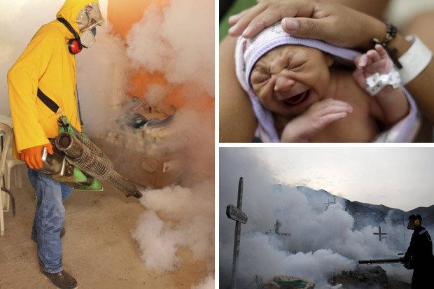 zika-virus-491772